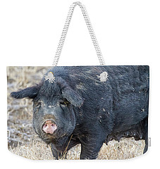 Weekender Tote Bag featuring the photograph Female Hog by James BO Insogna