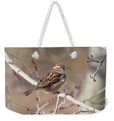 Female House Sparrow Weekender Tote Bag