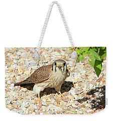 Female Kestrel Falcon Weekender Tote Bag
