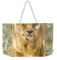 Weekender Tote Bag featuring the photograph Female Lion by Ayasha Loya