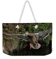 Female Mallard Weekender Tote Bag