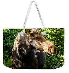 Female Moose At Jackson Hole Weekender Tote Bag