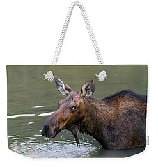 Weekender Tote Bag featuring the photograph Female Moose Head by James BO Insogna