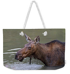 Weekender Tote Bag featuring the photograph Female Moose Head Shot by James BO Insogna