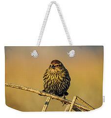 Female Red-winged Blackbird  Weekender Tote Bag