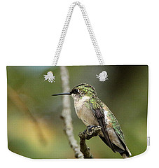 Female Ruby-throated Hummingbird On Branch Weekender Tote Bag
