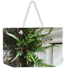 Weekender Tote Bag featuring the painting Fern by Kim Nelson