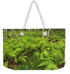 Ferns And Birch In Soft Light Weekender Tote Bag