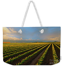 Weekender Tote Bag featuring the photograph Fields Of Yellow by Mike Dawson