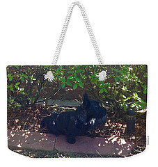 Weekender Tote Bag featuring the photograph Finding Shade by Diane Ferguson