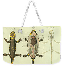 Weekender Tote Bag featuring the drawing Fire Salamander Anatomy by Christian Leopold Mueller