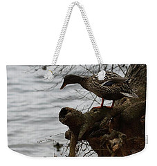 Weekender Tote Bag featuring the photograph First One In by Kim Henderson