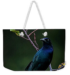 Male Boat-tailed Grackle Weekender Tote Bag by Cyndy Doty