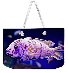 Weekender Tote Bag featuring the photograph Calico Goldfish by Joan Reese
