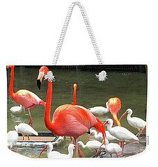 Flamingo Party Weekender Tote Bag by Beth Saffer