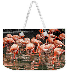 Weekender Tote Bag featuring the photograph Flamingo Looking For Food by Pradeep Raja Prints