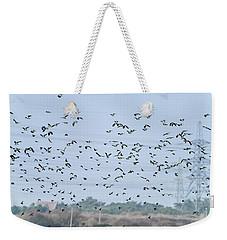 Flock Of Beautiful Migratory Lapwing Birds In Clear Winter Sky Weekender Tote Bag