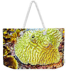 Weekender Tote Bag featuring the photograph Flower Coral by Perla Copernik
