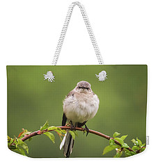 Fluffy Mockingbird Weekender Tote Bag by Terry DeLuco