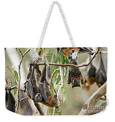 Flying Fox Colony Weekender Tote Bag