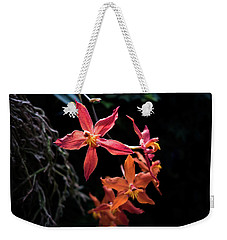 Weekender Tote Bag featuring the photograph Follow The Leader by David Sutton