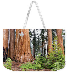 Weekender Tote Bag featuring the photograph Forest Growth by Peggy Hughes