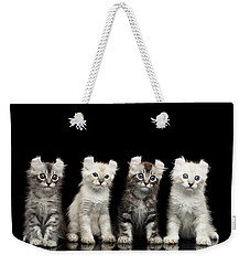 Four American Curl Kittens With Twisted Ears Isolated Black Background Weekender Tote Bag by Sergey Taran
