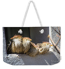 Four Stooges - Guira Cuckoos Weekender Tote Bag by Gary Whitton