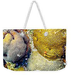 Weekender Tote Bag featuring the photograph Foureye Butterflyfish by Perla Copernik