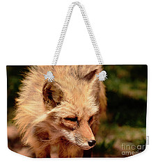 Weekender Tote Bag featuring the photograph Fox On The Hunt by Debby Pueschel