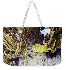 Weekender Tote Bag featuring the photograph French Grunt Swimming by Perla Copernik