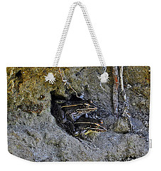 Weekender Tote Bag featuring the photograph Friendly Frogs by Al Powell Photography USA