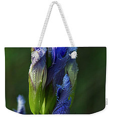 Weekender Tote Bag featuring the photograph Fringed Getian With Dew by Ann Bridges