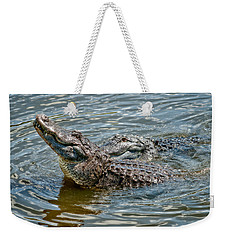 Weekender Tote Bag featuring the photograph Frisky In Florida by Christopher Holmes
