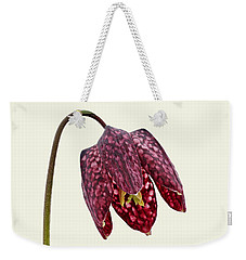 Fritillaria Meleagris - Cream Background Weekender Tote Bag