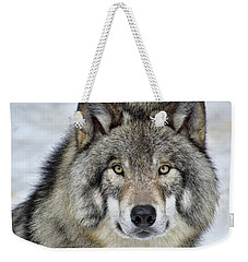 Weekender Tote Bag featuring the photograph Full Attention  by Tony Beck