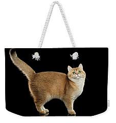 Funny British Cat Golden Color Of Fur Weekender Tote Bag