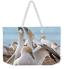 Weekender Tote Bag featuring the photograph Gannets by Werner Padarin