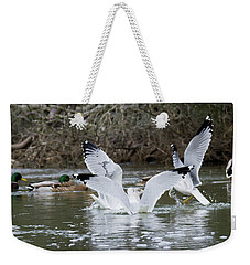 Weekender Tote Bag featuring the photograph Gathering Of Egrets by George Randy Bass