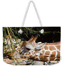Weekender Tote Bag featuring the photograph Gentle Beauty by Donna Brown