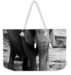 Weekender Tote Bag featuring the photograph Gentle One by Karol Livote