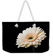Weekender Tote Bag featuring the photograph Gerbera Daisy On Black II by Clare Bambers