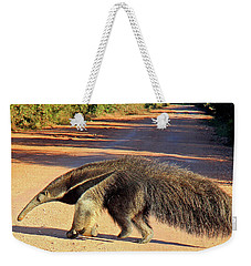 Giant Anteater Crosses The Transpantaneira Highway In Brazil Weekender Tote Bag