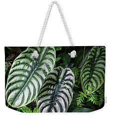 Weekender Tote Bag featuring the photograph Giant Calladium Leaves by Richard Goldman