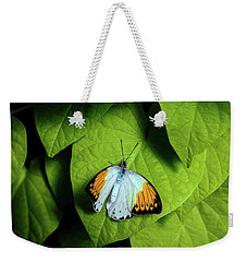 Weekender Tote Bag featuring the photograph Giant Orange Tip Butterfly by Tom Mc Nemar