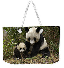 Weekender Tote Bag featuring the photograph Giant Panda Ailuropoda Melanoleuca by Katherine Feng
