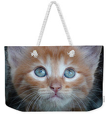 Ginger Kitten With Blue Eyes Weekender Tote Bag by Sergey Lukashin