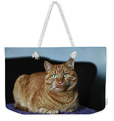 Weekender Tote Bag featuring the photograph Ginger Marmalade Cat by Nareeta Martin