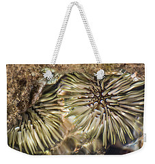 Weekender Tote Bag featuring the photograph Glistening by Colleen Coccia