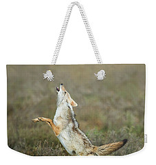 Golden Jackal, Canis Aureus, Leaping At Vulture Weekender Tote Bag